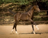 CCF Clear Sailing (Clintord I x Julio Mariner)